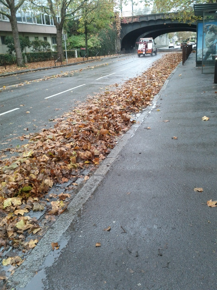 If the Ninja Turtle had insisted on wanting to run along the riverside, not only would she have drowned, she would have also missed this pretty row of leaves to stomp in.
